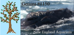 Right whale Gemini's Family Tree