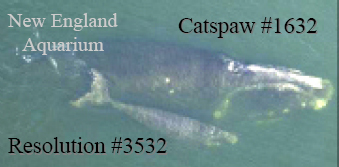Resolution and Catspaw in 2005
